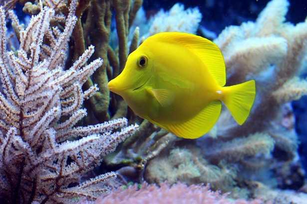 acquario marino componenti