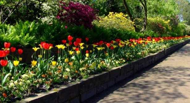 piante da bordura per giardino