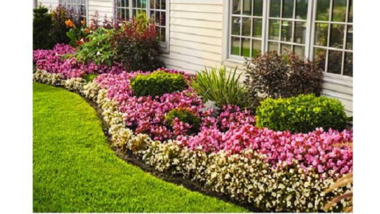 Piante Per Aiuole Perenni bordure fiorite per vialetti - idee green