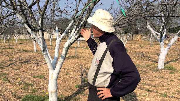 calce spenta agricoltura tronchi