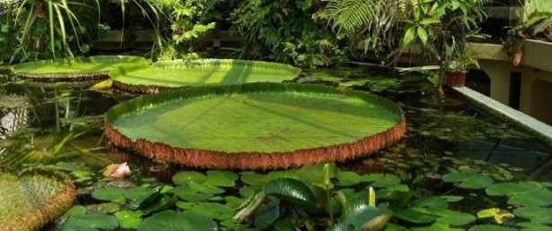Idee per giardino idee green for Idee per il giardino economiche