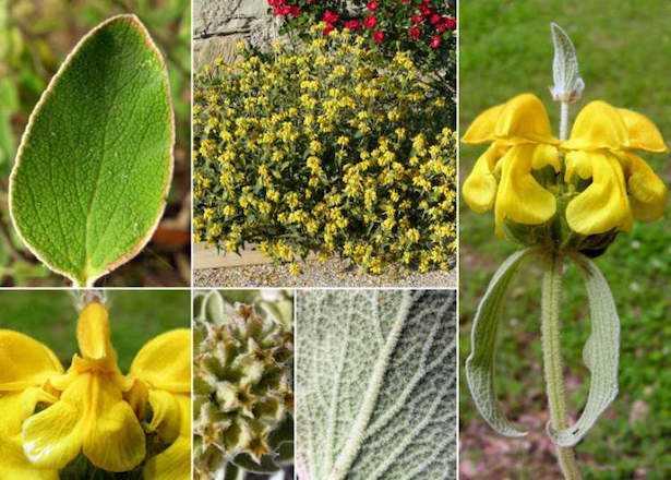 piante resistenti alla siccità