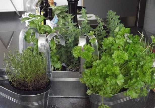 Piante in cucina aromatiche - Idee Green
