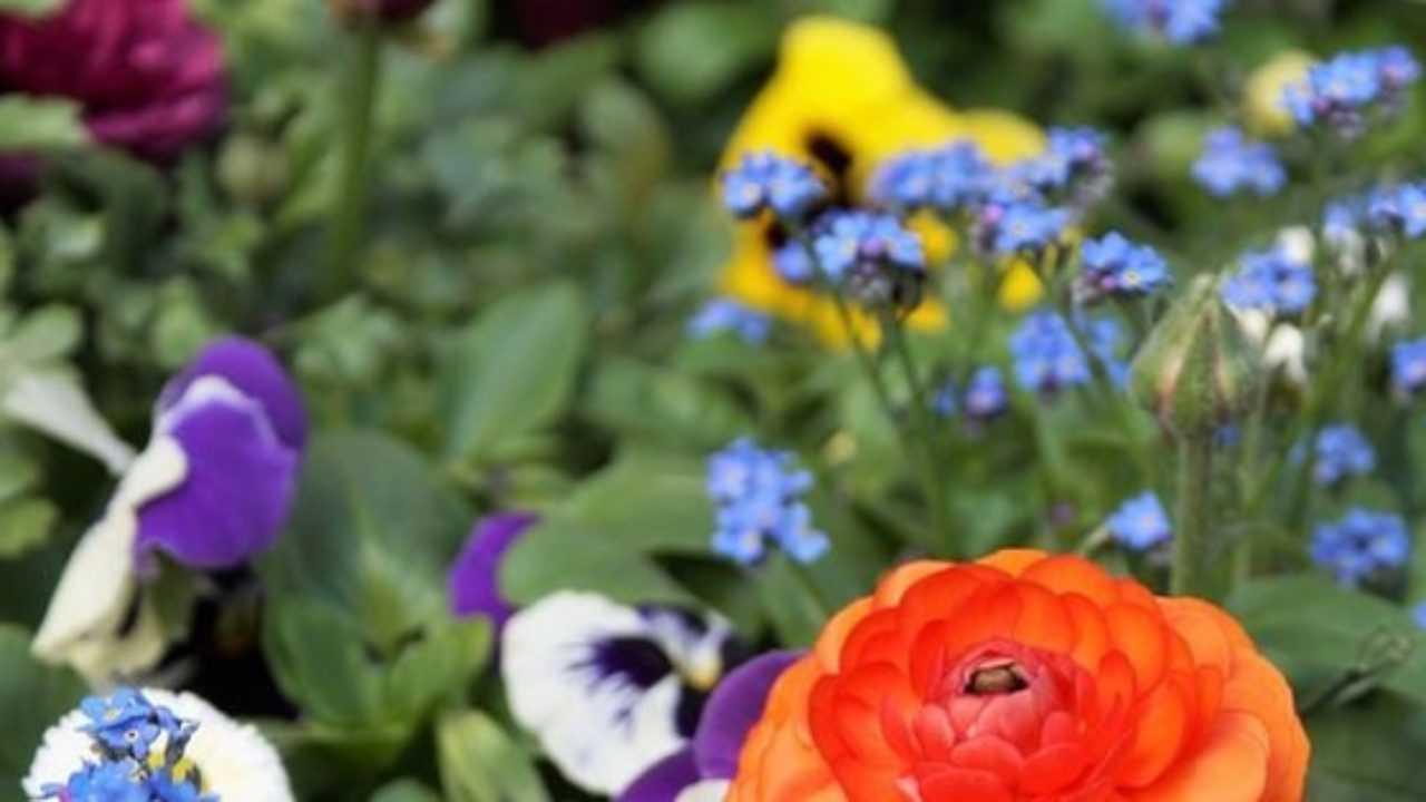 Piante Per Aiuole Perenni piante perenni per aiuole al sole - idee green