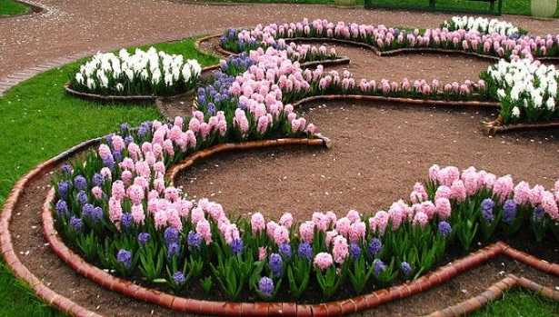 piante perenni per aiuole al sole idee green
