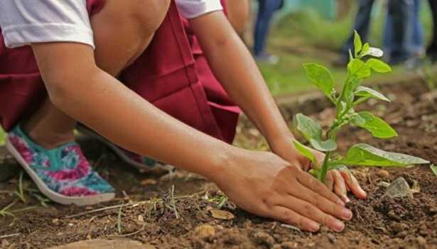 Piantumazione: significato e alberi