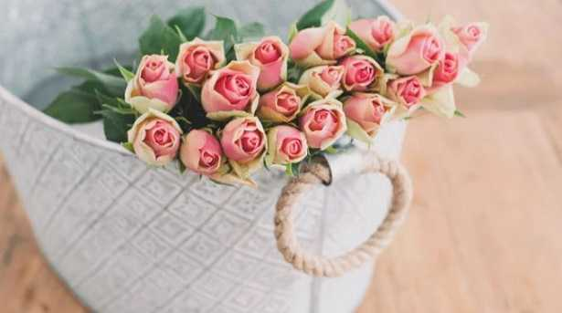 rose da interno