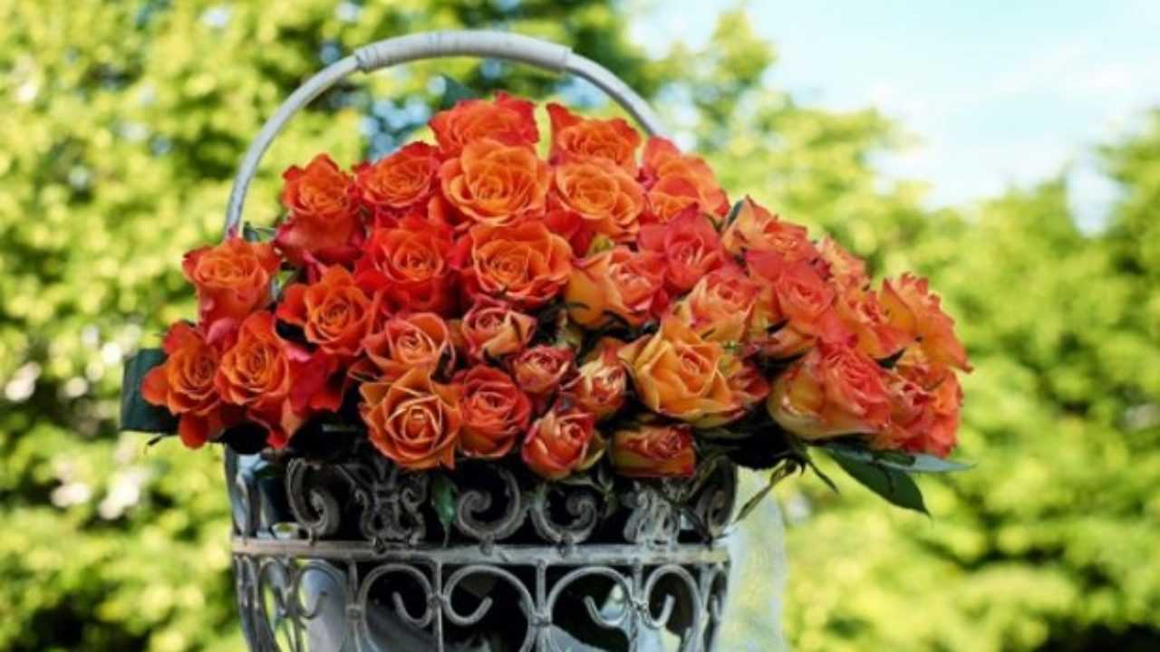 Rose Da Taglio Rifiorenti rose da taglio rifiorenti - idee green