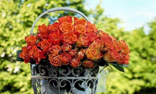 Rose da taglio rifiorenti