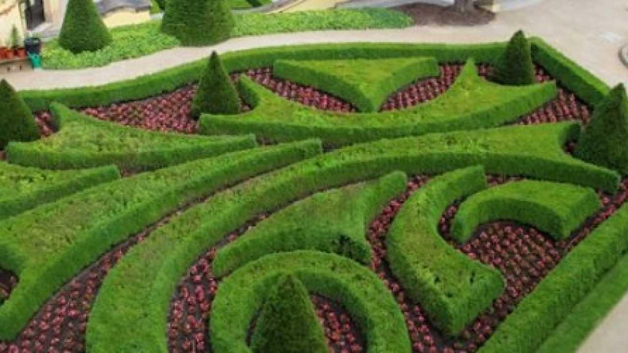 Piante Siepe Crescita Rapida tipi di siepe fiorita - idee green