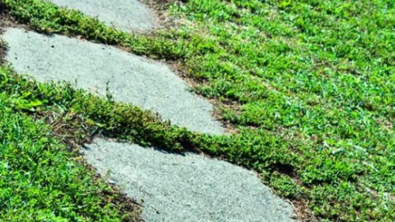Realizzare Prato Su Cemento vialetto da giardino economico - idee green