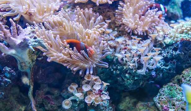 Come aumentare il pH dell'acquario marino