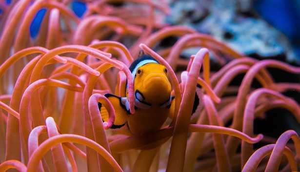 Come trasformare un acquario dolce in marino