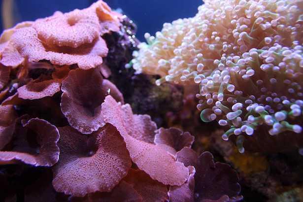 Patina batterica nell'acquario marino