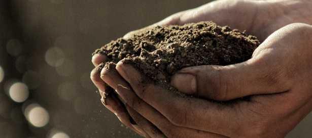 Agroecologia: definizione