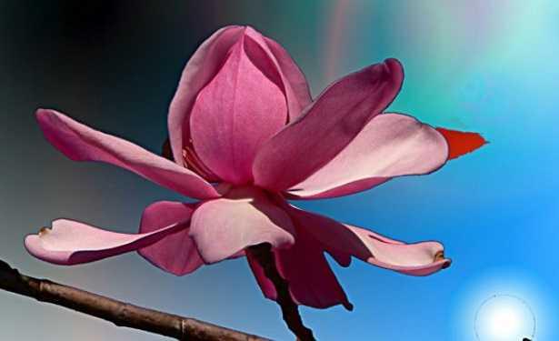 Angiosperme: fiore