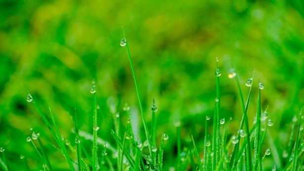 Irrigazione del prato: kit