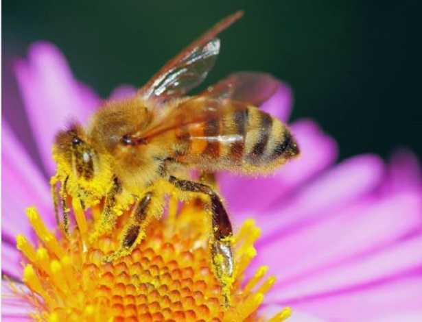 Raccolta del polline e trappole
