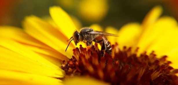 Raccolta del polline |  trappole