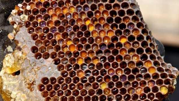 Raccolta polline: periodo