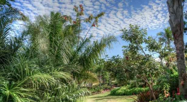 Varietà di palme
