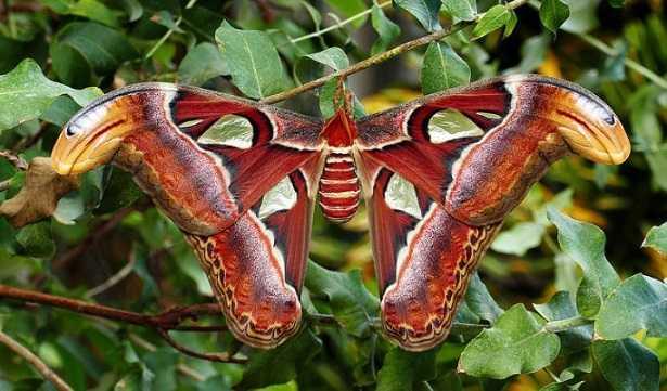 Farfalle rare