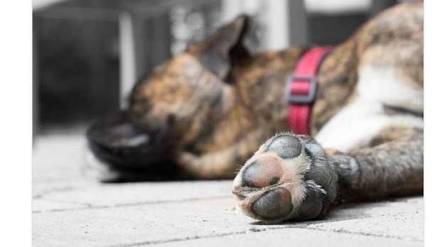 Forasacco e cani: zampa