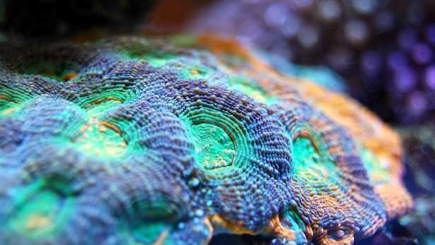 discosoma acquario marino
