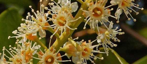 Fiore ermafrodita: struttura