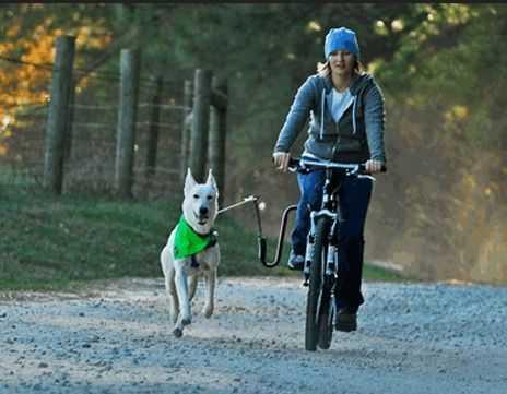 Donna che pedala con il suo cane al guinzaglio delle propria bicicletta