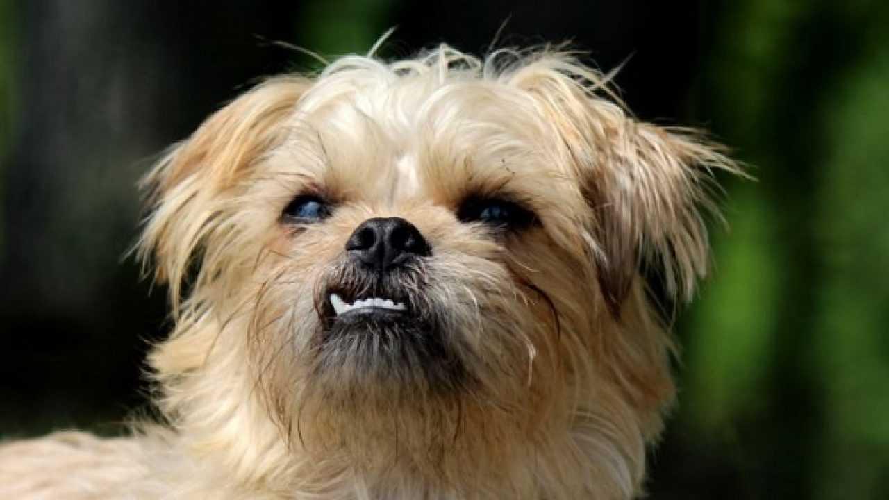 Repellente Naturale Per Vespe repellente naturale per cani - idee green