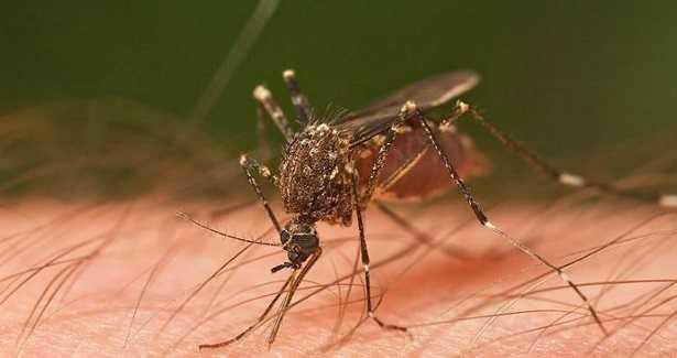 Repellente naturale per zanzare