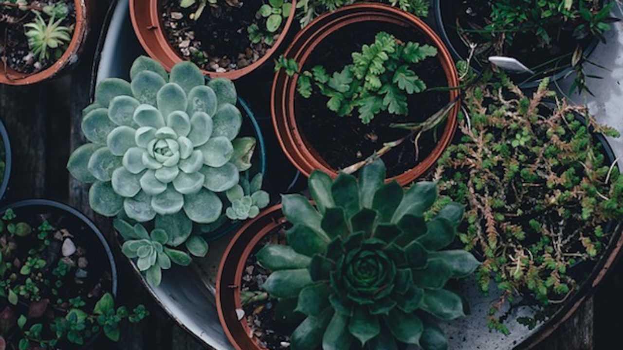 Piante Grasse Piccole Prezzi la semina delle piante grasse - idee green
