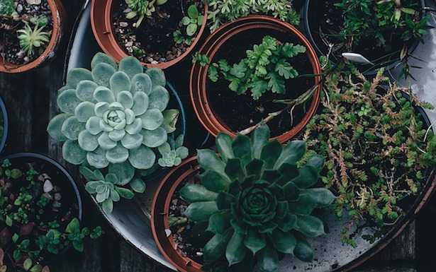 semina piante grasse