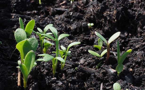 Cosa coltivare ad agosto