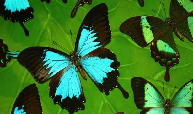 Effetto farfalla e teoria del caos