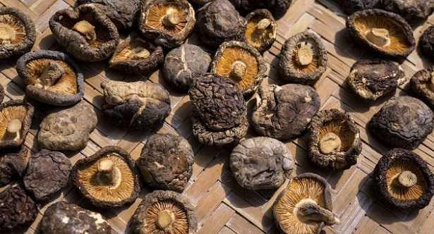 Funghi shiitake: ricette