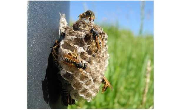 Piccolo nido di vespe