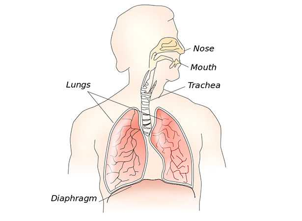 respirazione diaframmatica