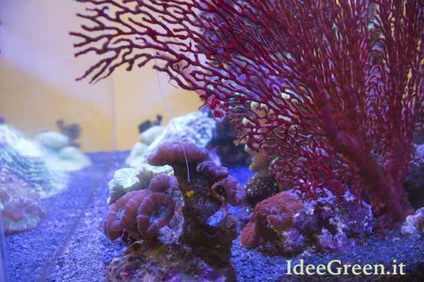 acquario marino tropicale allestimento