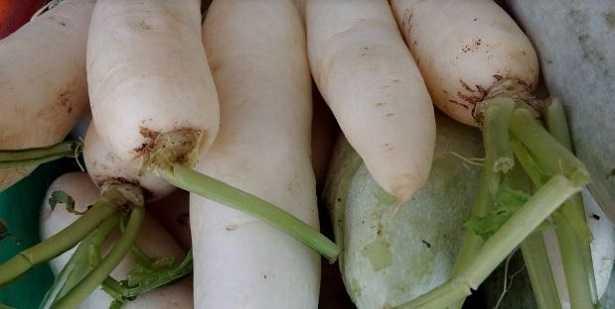 Carota bianca: come cucinarla