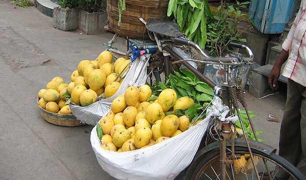mango frutto