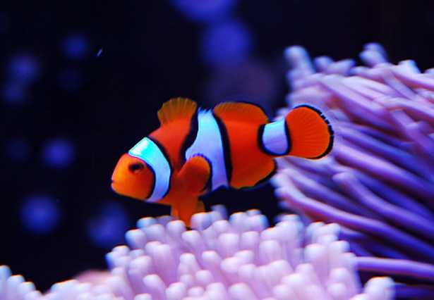 pesci marini resistenti
