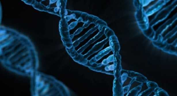 Ribosomi: cosa sono e quale funzione hanno