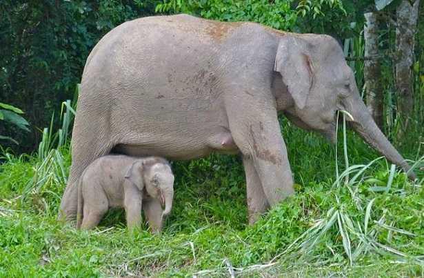 10 animali a rischio di estinzione in Italia e nel mondo