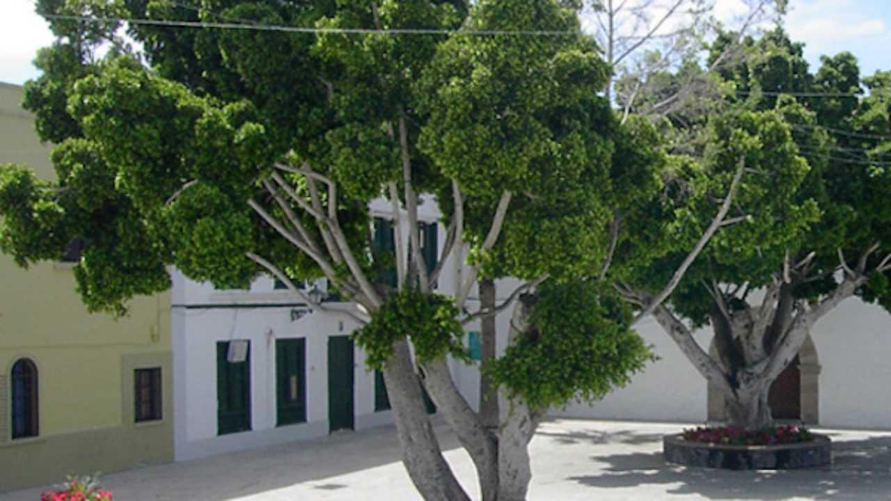 Come Riprodurre Il Ficus Benjamin ficus benjamin: moltiplicazione - idee green