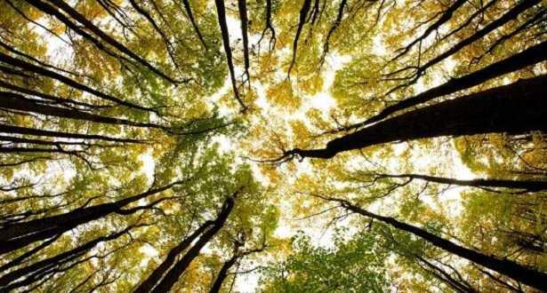 Naturopatia: definizione