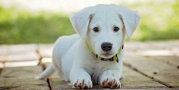Salviettine per cani