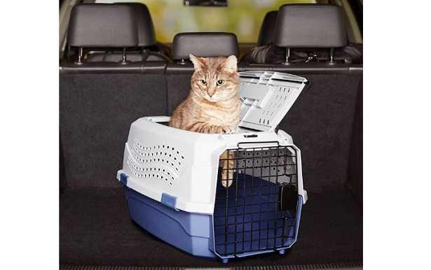 Trasportino per gatto