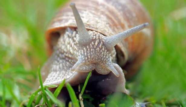 I 10 animali più lenti del mondo